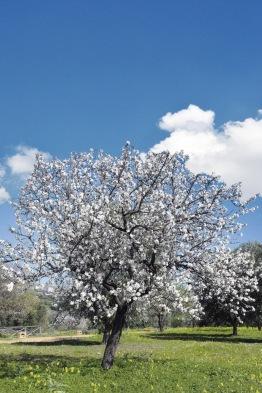 En su estallido de eclosión primaveral